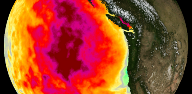 May 2015 monthly average Sea Surface Temperature (SST) anomaly
