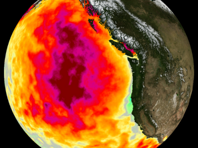 2015 Monthly average Sea Surface Temperature (SST) anomaly